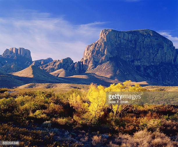 autumn forest at big bend national park - chisos mountains stock pictures, royalty-free photos & images