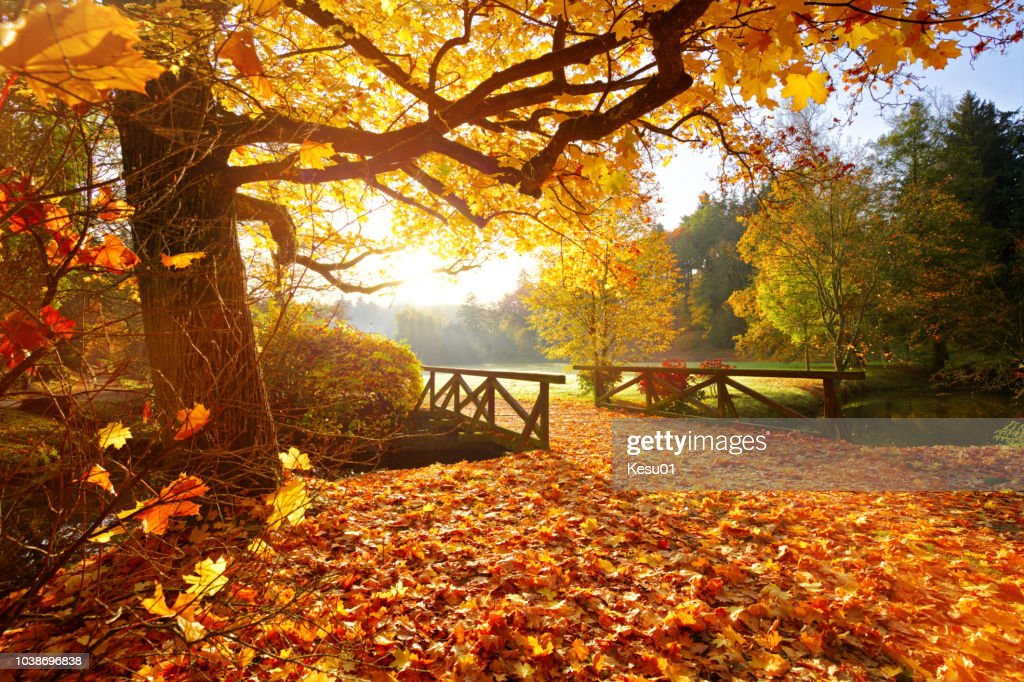 Autumn forest. Beautiful rural scenery. : Stock Photo