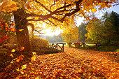 Autumn forest. Beautiful rural scenery.