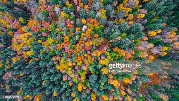 herfst bos van bovenaf - weelderige plantengroei stockfoto's en -beelden
