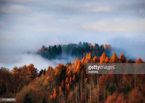 Autumn forest in the fog, Uetliberg, Switzerland