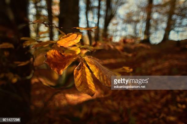 autumn forest in the leaf - edoardogobattoni fotografías e imágenes de stock