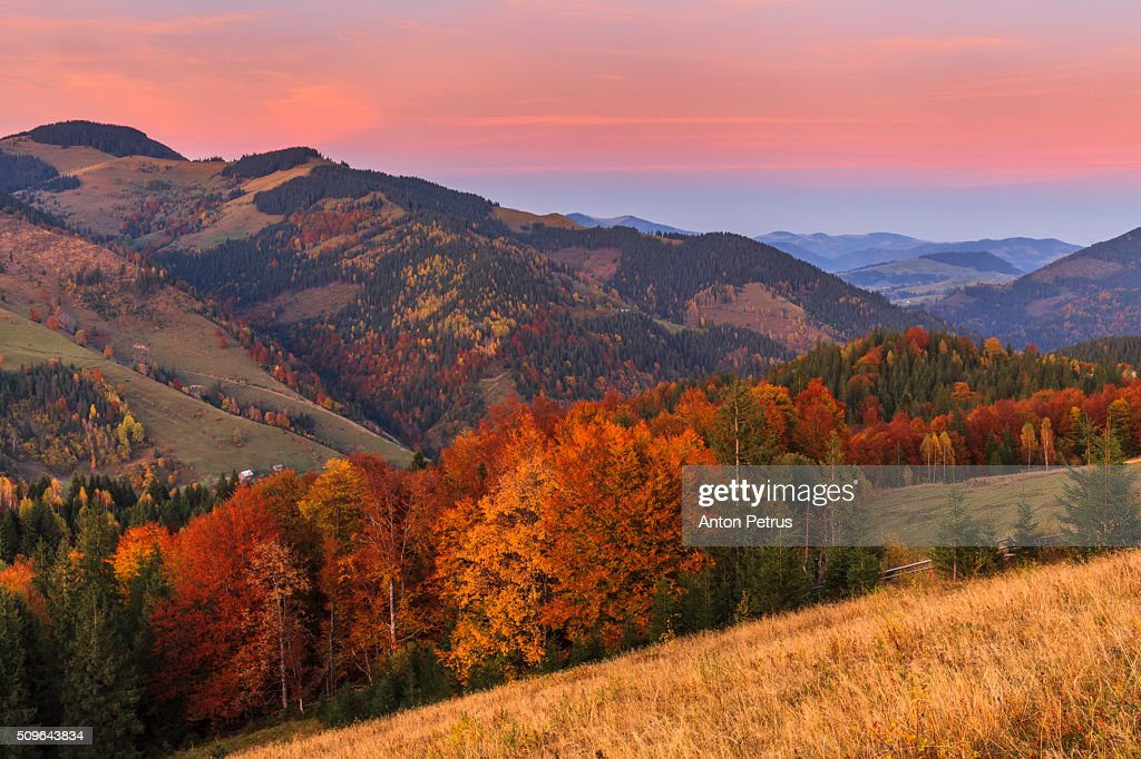 autumn forest in the mountains ストックフォト getty images