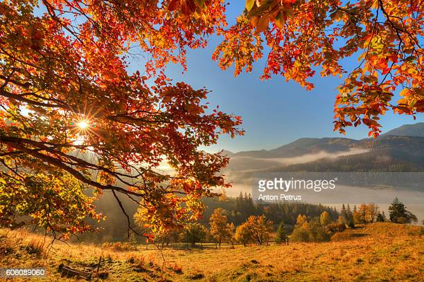 autumn forest in the mountains - anton petrus panorama of beautiful sunrise stock pictures, royalty-free photos & images