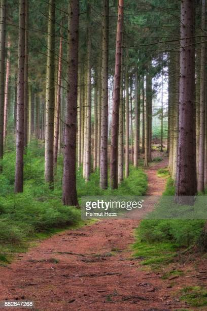 autumn forest in thuringia - thuringia stock pictures, royalty-free photos & images