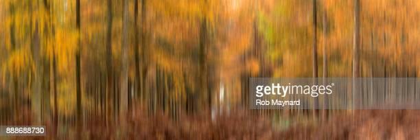 Autumn Forest in wildness