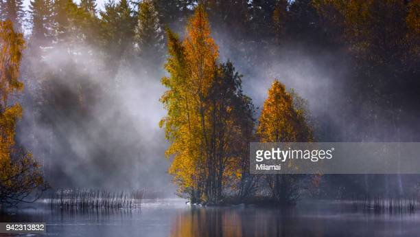 Autumn forest lake, Finland