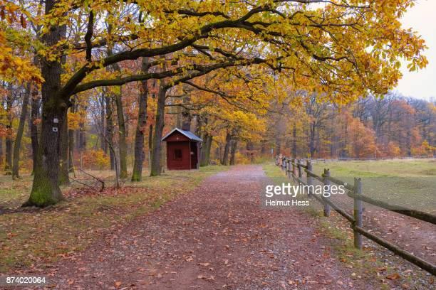 autumn forest near Erfurt