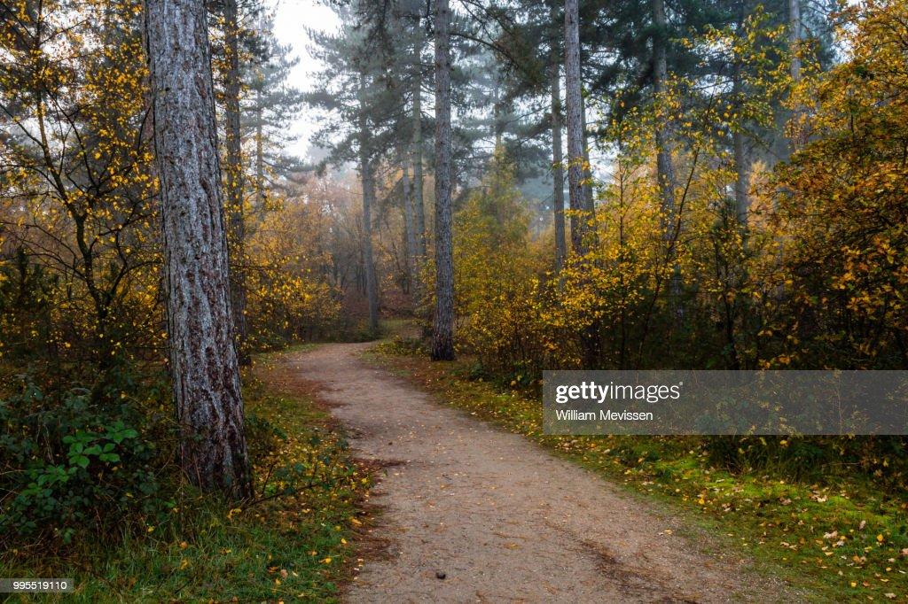 Autumn Forest Path : Stockfoto