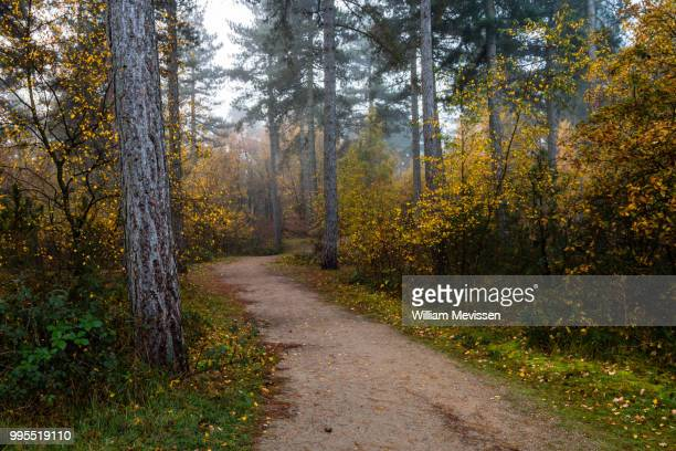 autumn forest path - william mevissen stockfoto's en -beelden