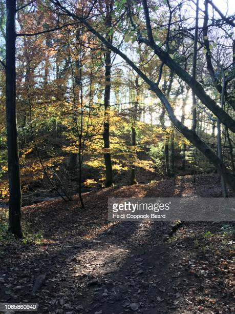autumn forest - heidi coppock beard stock pictures, royalty-free photos & images
