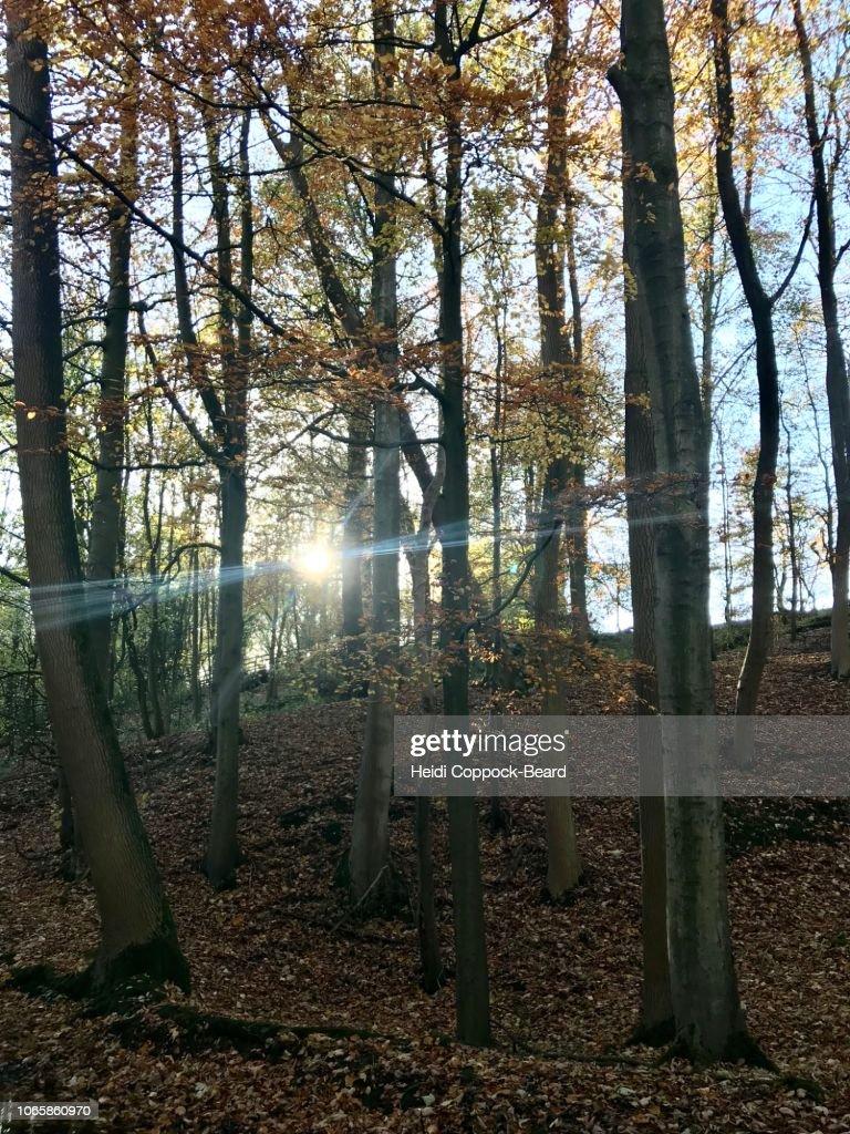Autumn forest : Stock Photo