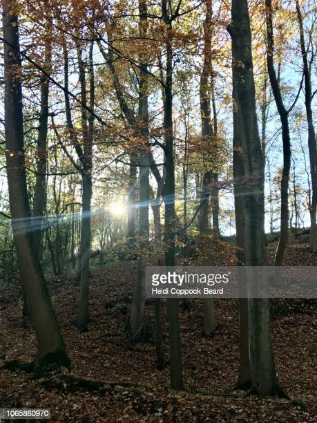 autumn forest - heidi coppock beard stockfoto's en -beelden