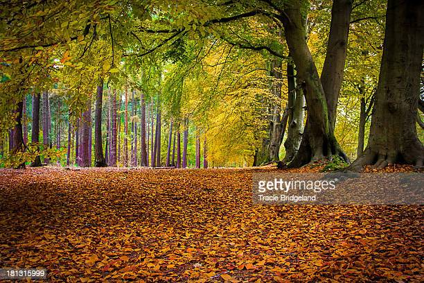 autumn forest - northamptonshire stock pictures, royalty-free photos & images