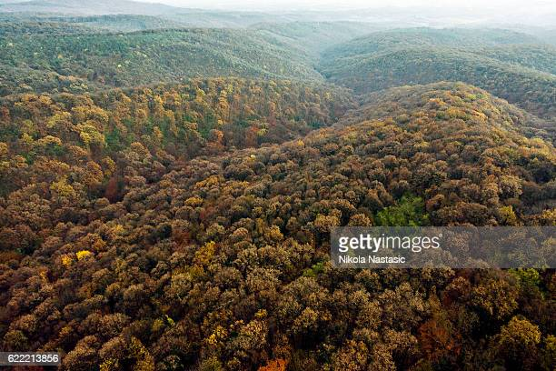 autumn forest - national landmark stock pictures, royalty-free photos & images