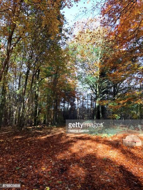 autumn forest - rekha garton stock pictures, royalty-free photos & images