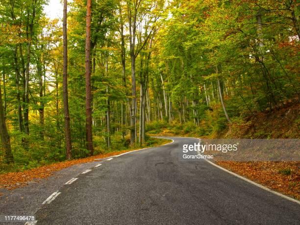 strada forestale autunnale - bicolore colore foto e immagini stock