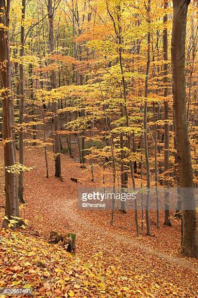 autumn forest road - kosice stock photos and pictures