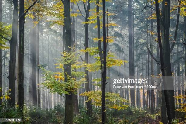 autumn forest, soest, netherlands - nature stock pictures, royalty-free photos & images