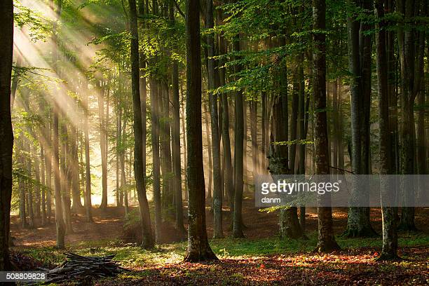 autumn forest trees. nature green wood sunlight backgrounds. - árbol de hoja caduca fotografías e imágenes de stock