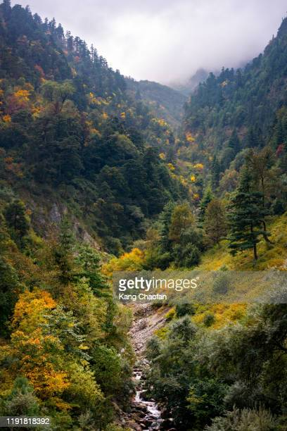 autumn forest view with river in annapurna circuit trek, nepal - annapurna south stock pictures, royalty-free photos & images