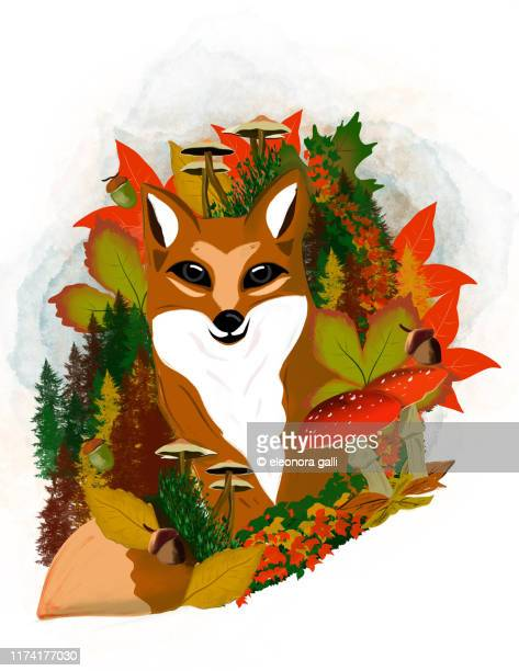 autumn fox - vertical stock pictures, royalty-free photos & images