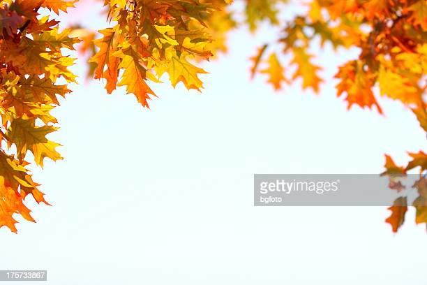 Herbst Frame