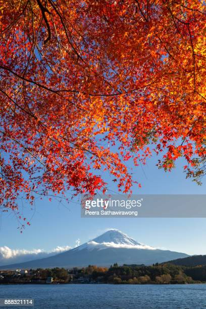 Autumn Fuji and red maple