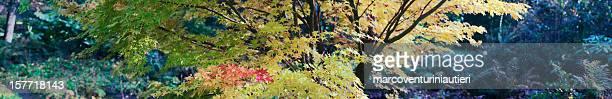 Autumn garden: colorful foliage