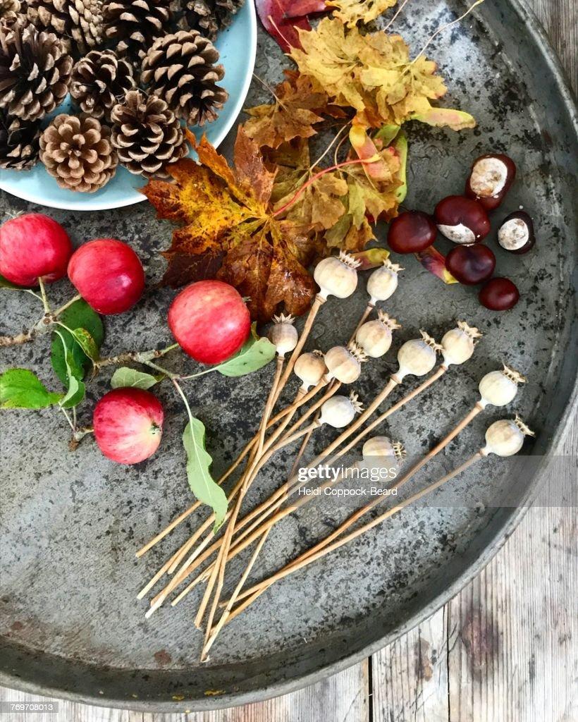 Autumn Garden : Foto stock