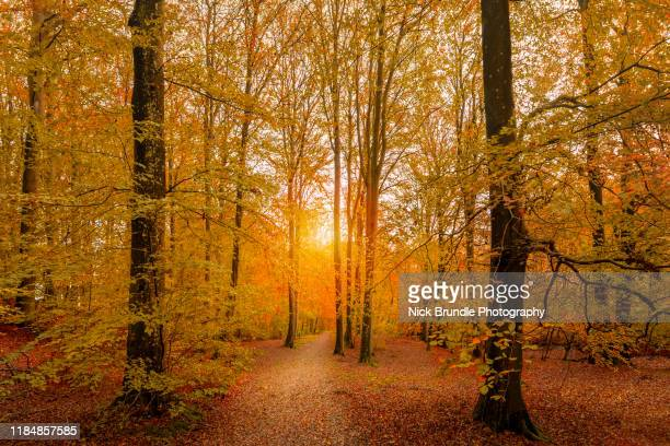 autumn glory - denmark stock pictures, royalty-free photos & images