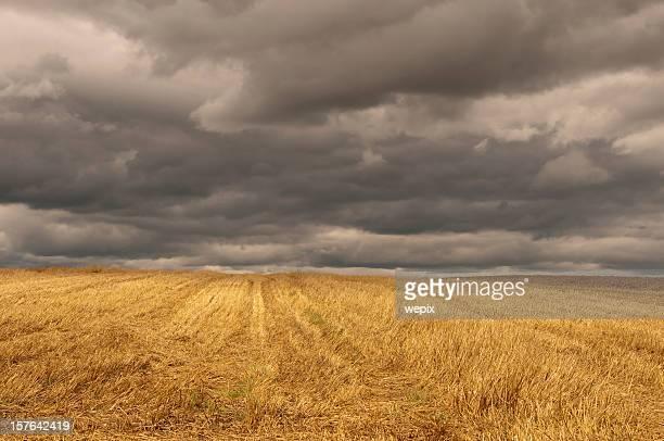 Herbst golden Stoppelbart field dunklen bewölkten stürmischen Himmel