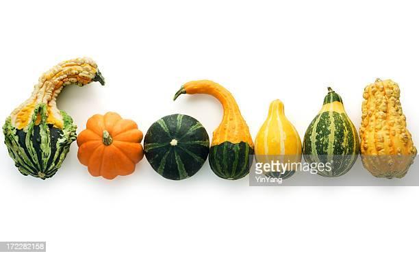 herbst gourds isoliert - gartenkürbis stock-fotos und bilder