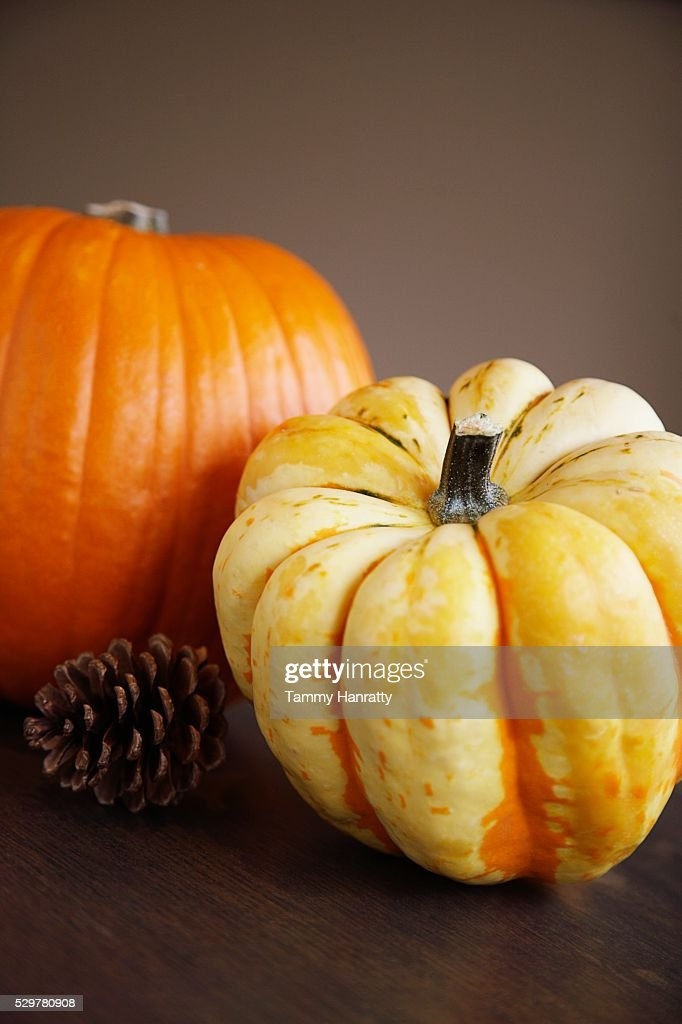 Autumn Gourds : Stock Photo