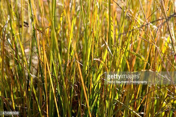 Autumn grass in sunlight