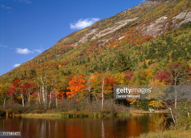 autumn hardwood forest and pond beneath mt. webster, white mountains, crawford notch state park, new hampshire, usa - the webster stock pictures, royalty-free photos & images