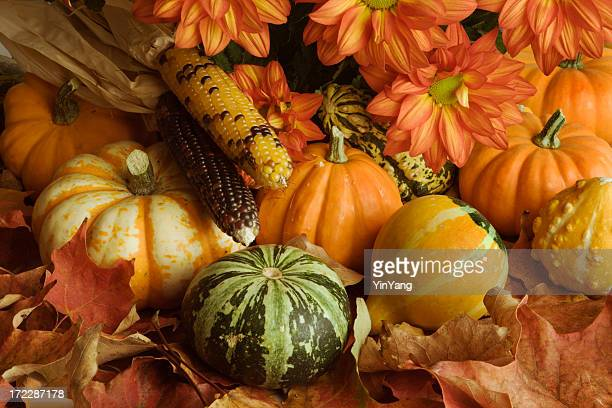 autumn harvest crop arrangement of leaves, pumpkin, chrysanthemum, corn, squash - indian corn stock photos and pictures