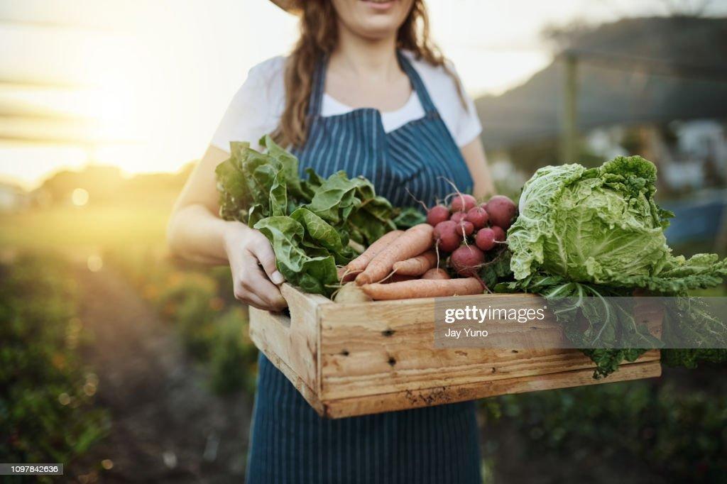 Herfst oogst : Stockfoto