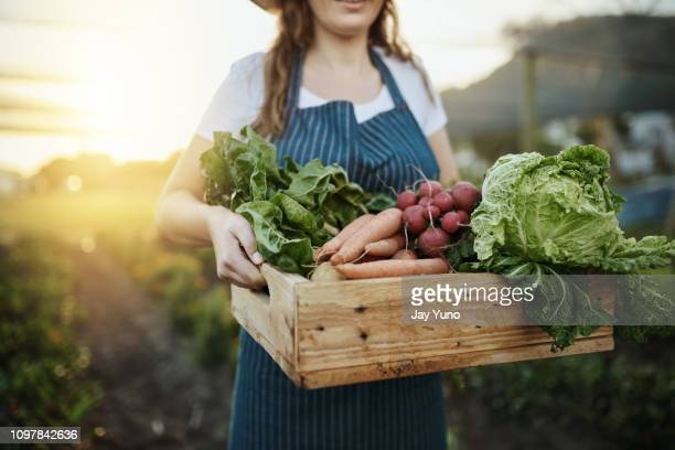 autumn harvest - agriculture stock pictures, royalty-free photos & images