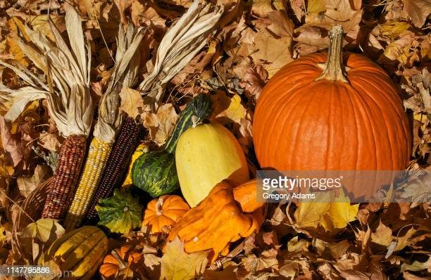 autumn harvest - harvest festival stock pictures, royalty-free photos & images