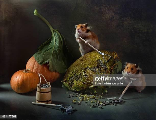 autumn harvest - hamster stock-fotos und bilder