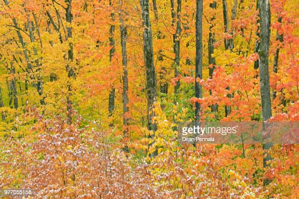 autumn hiawatha national forest - hiawatha national forest stock pictures, royalty-free photos & images