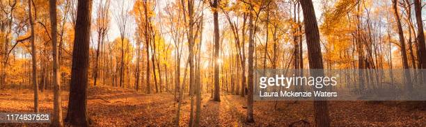 autumn hike pano - panoramic stock pictures, royalty-free photos & images