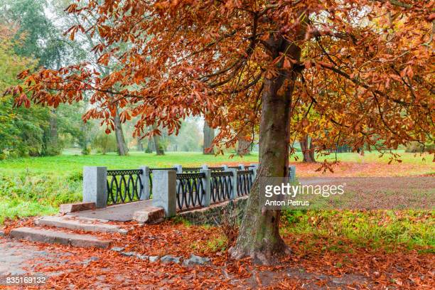 autumn in a beautiful park. bridge over river - laubbaum stock-fotos und bilder