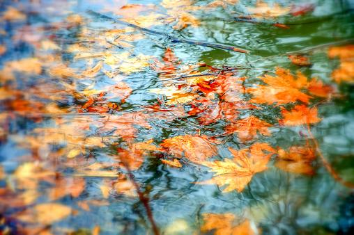 Autumn in Antalya, Turkey. January 20, 2013 874072232