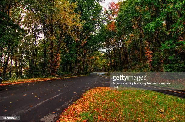 autumn in asheville north carolina - carolina do norte estado dos eua - fotografias e filmes do acervo