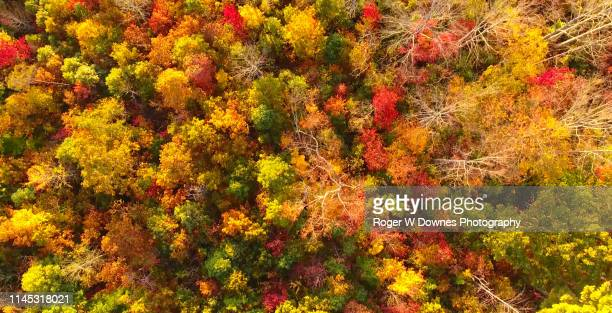 autumn in asheville - blue ridge parkway stock pictures, royalty-free photos & images