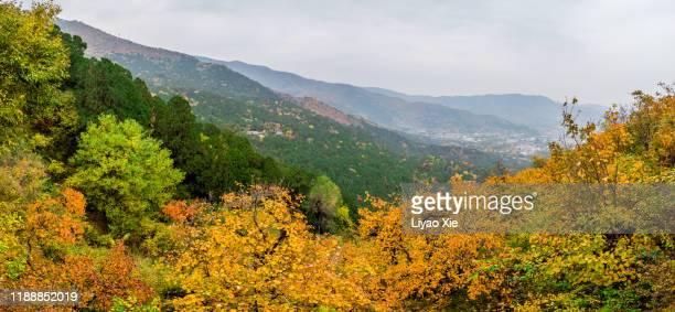 autumn in beijing - liyao xie fotografías e imágenes de stock