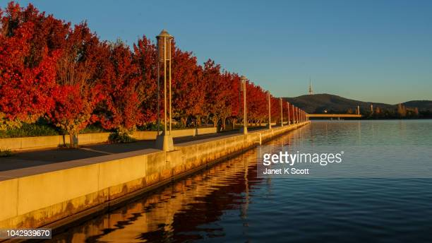 autumn in canberra - australian capital territory stock pictures, royalty-free photos & images