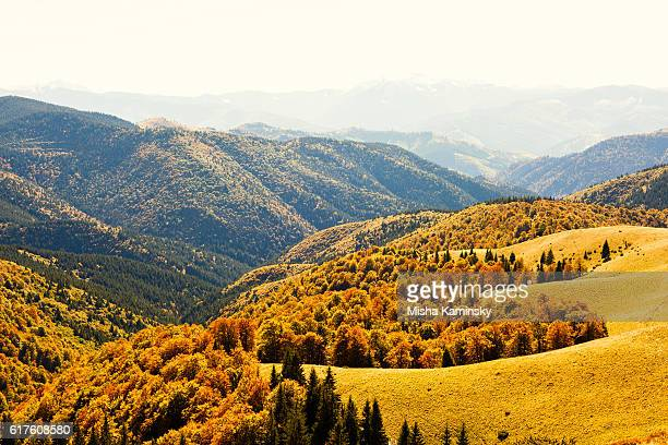 autumn in carpathian mountains - beech tree stock pictures, royalty-free photos & images